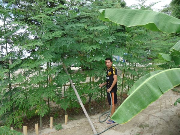 Moringa-nach-3-Monaten-Plan-Verde-e.v.