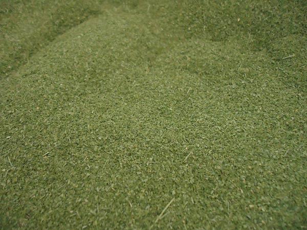 Moringapulver-Plan-Verde-e.V.