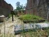 Plan-Verde-Moringa-Bananen-Vetiver-Gras