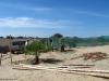 Rettung von 2 Palmen und Einpflanzung