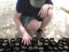 Kontrolle und die Samen kommen in die Erde