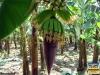 Besuch einer Bananenplantage