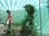 ... Pflanzen, die es in Piura nicht gibt ...