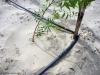 Tröpfchenbewässerung = Wasserersparnis