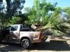 Rettungsaktion Palme ... Hilfe von Freunden