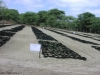 Plantage Plan Verde