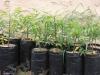 Pflanztüten Neembäumchen