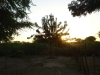 Sunset and Neem