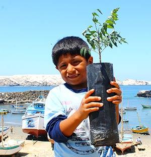 """Mit 350 """"Neem Trees"""" an den Pazifik"""